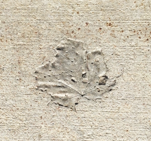 Leaf_concrete