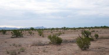 Desert 10Au15_1020216