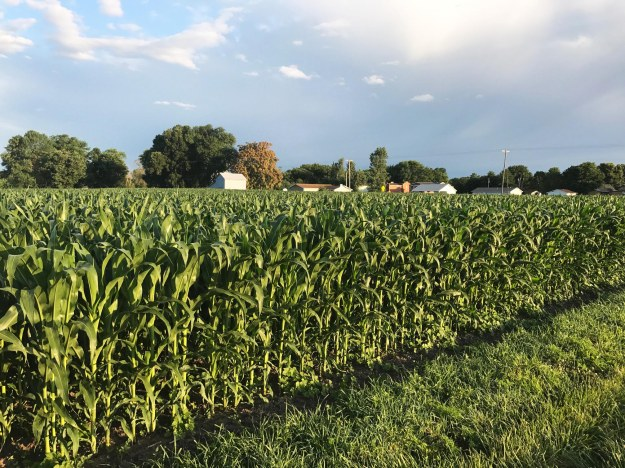 Corn Jul17_0146