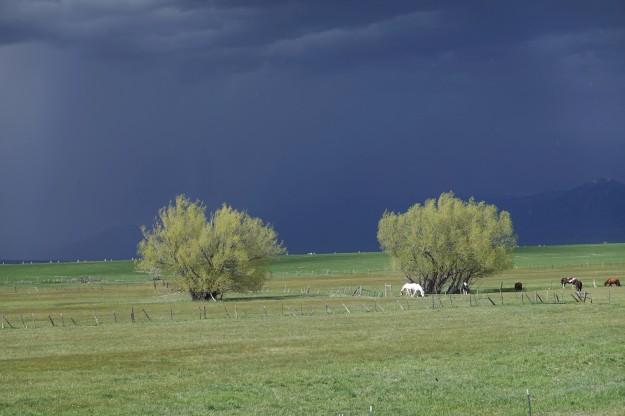 Pasture 2020My15 DSC01759BL